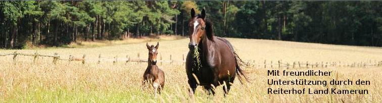 Reiterhof Land Kamerun, ideal für eine tiergestützte Therapie